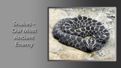 Snakes – Our Most Ancient Enemy