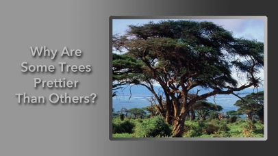 Why Are Some Trees Prettier Than Others?